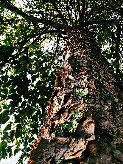 green tree with brown tree trunk photo