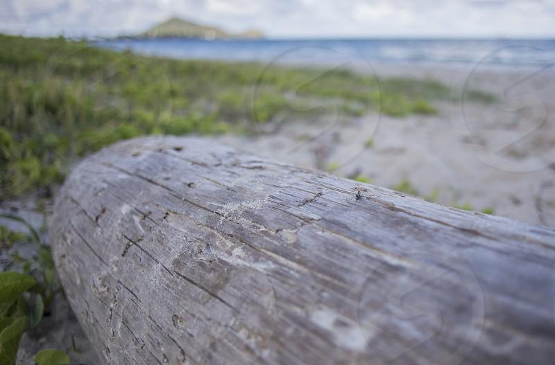 beach wood drift log grain hawaii sand waves depth of field focus photo