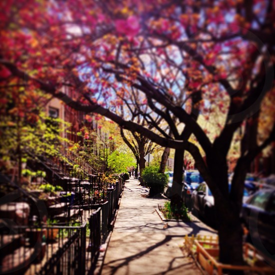 Park slope brooklyn  photo