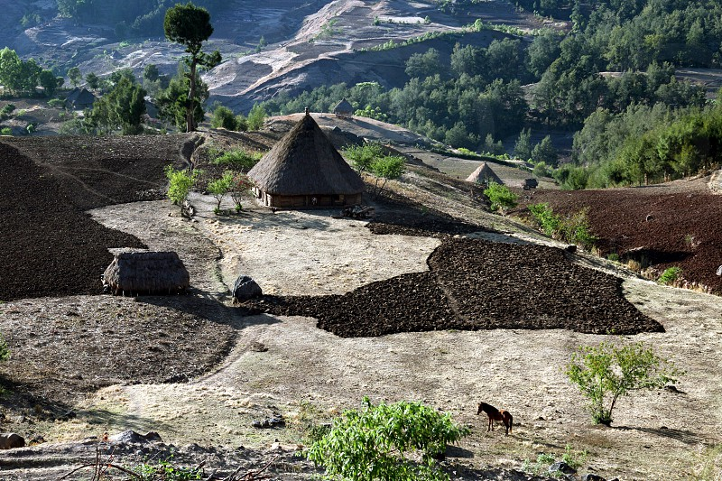 The Landscape with traditioal houses at the village of Moubisse in the south of East Timor in southeastasia.
