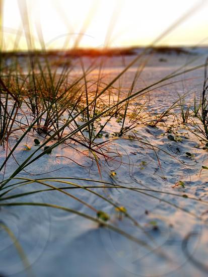 sunrise on the beach photo