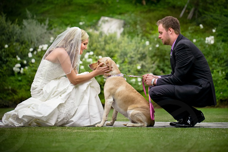 A bride and groom petting a dog.  Puppy golden dress gown veil tux suit formal leash pink love hold face young Caucasian couple photo