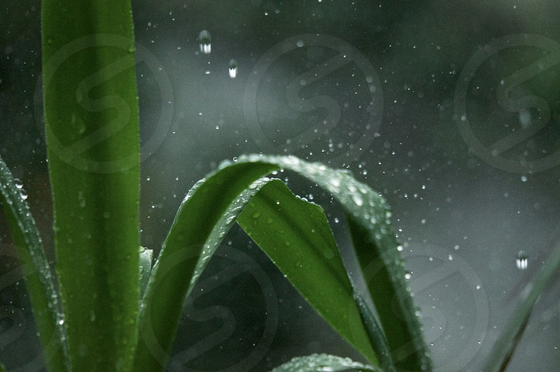 Rain Drops on green plant photo