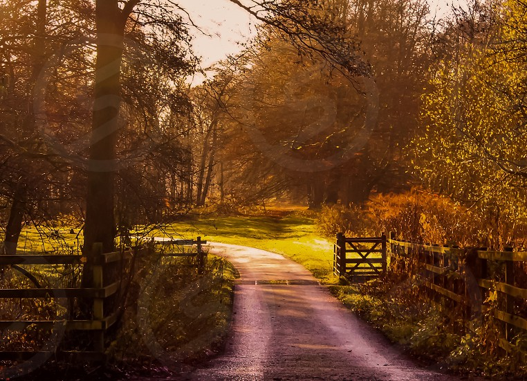Countryside road photo