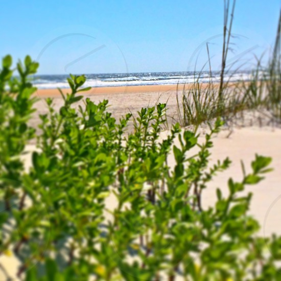 green plants on edge of beach sand dune photo