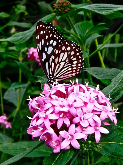 #butterfly photo
