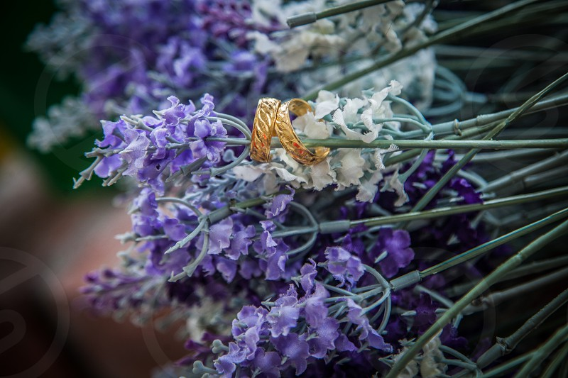 photo of lavender flowers photo