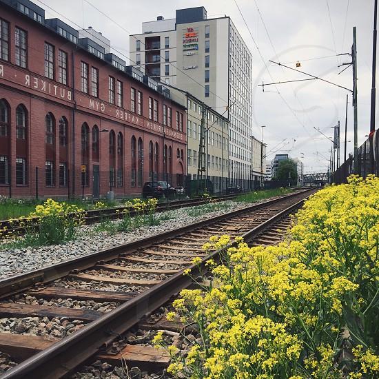 yellow flowers beside rail road train photo