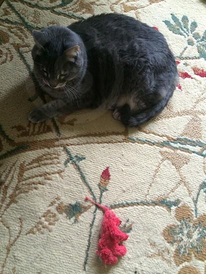 Kitty; cat; home photo