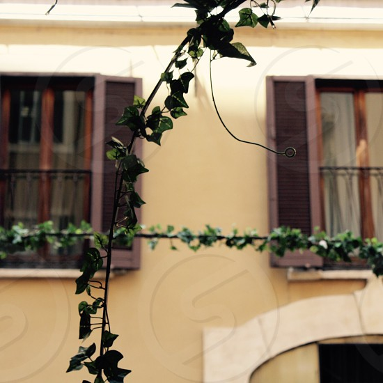 Rome building architecture shutters windows ivy travel photo