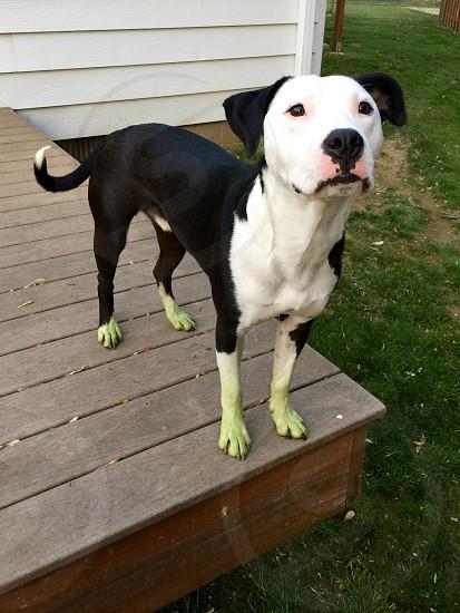 Green dog photo
