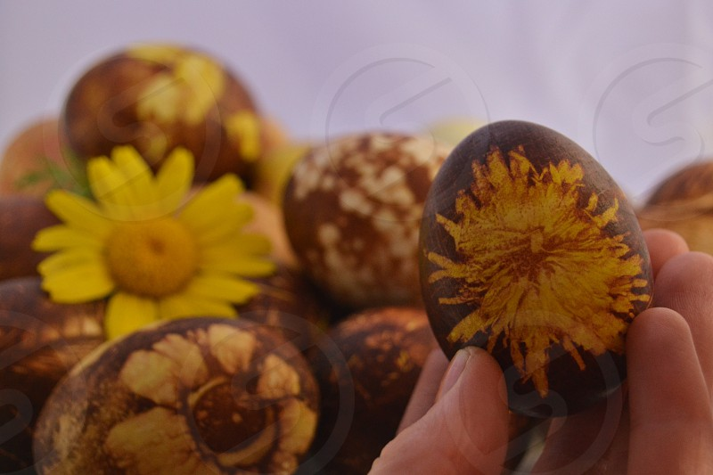natural designs for Easter Eggs. Dyed in boiled water with lots of onion skin to get strong  brown color on random places on the egg put any plant flower seed grass - anything with different shape to create unique designs. :) photo