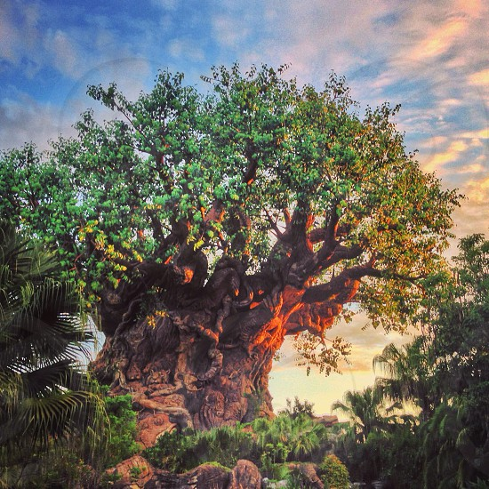The Tree of Life at sunrise. photo