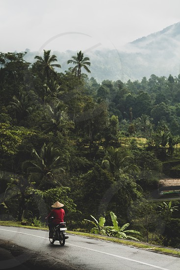 Depth; Rice Terrace's; mountains; culture; local; travel; holiday; Bali; Indonesia; palm trees photo