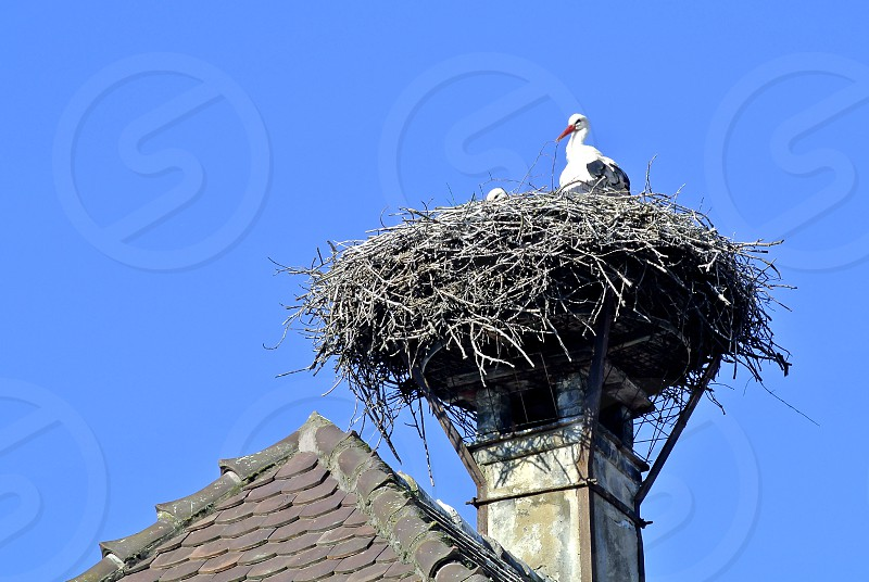 stork in a nest on a roof in France photo
