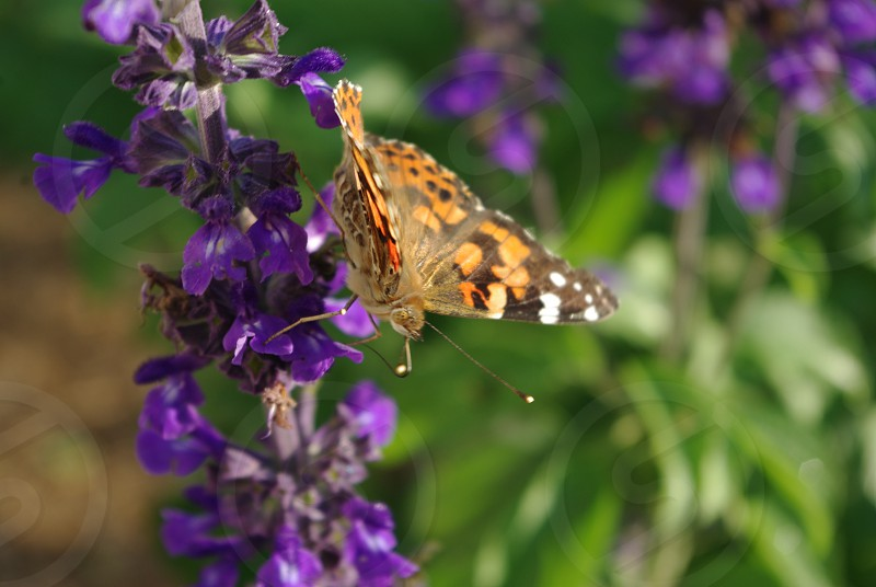 Flowers and butterfly photo
