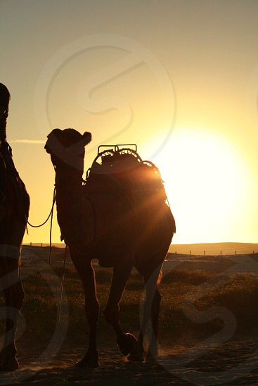 Camel lens flare sun photo