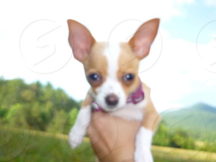 Dog puppy love photo