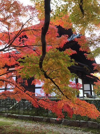 京都 東福寺 photo