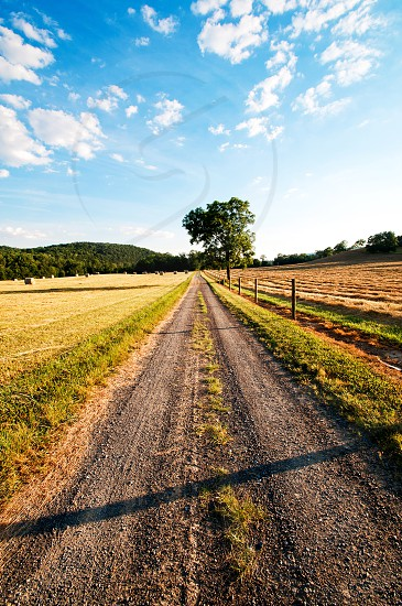 Empty direct road in the country with lone tree photo