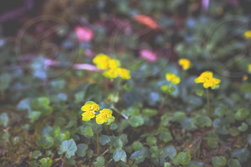 Meditational inspiringreflective flowernatureflowersspringseasonalbeauty photo