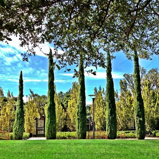 Palo Alto CA photo