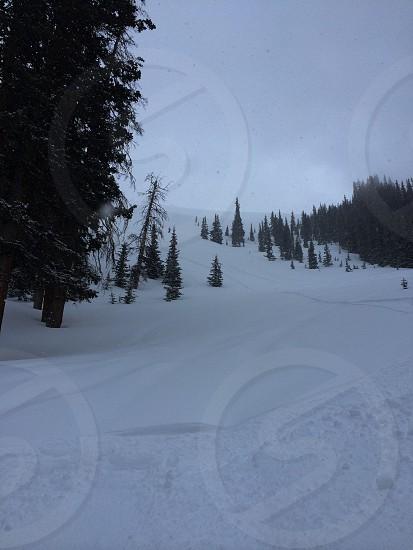 Backcountry powder skiing Colorado  photo