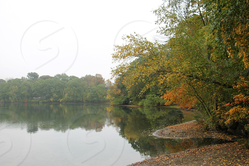 Trees changing color are reflected near a pond. photo