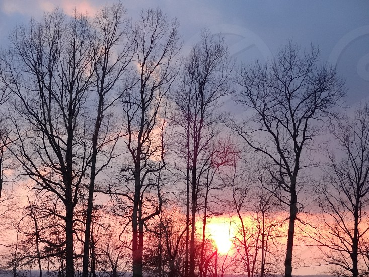 Blue and orange winter sunset behind bare trees                             photo