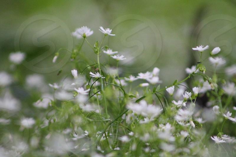 Soft focuswild flowersnaturewildlifecountrysideruralsummers daygentlebreeze photo