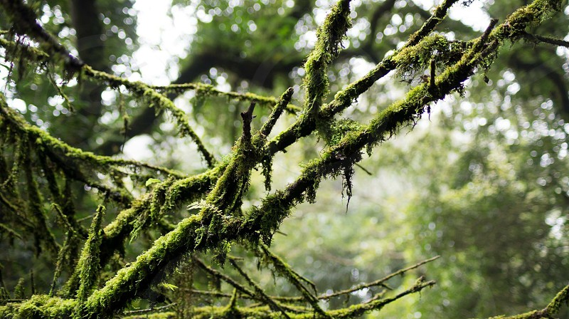 Tree green moss nature old timeless photo