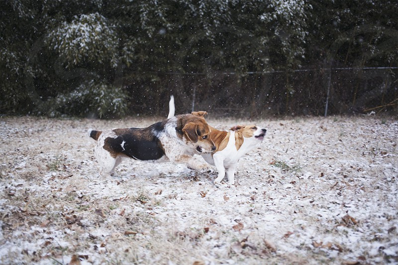 2 dogs fighting photo