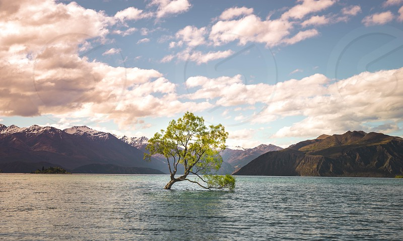 That Wanaka Tree in New Zealand. It was once a fence post but is now the most photographed tree in New Zealand. photo