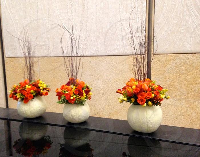 Fall flowers.... photo