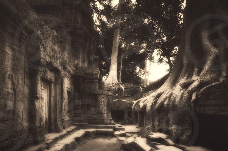 Ta Prohm Angkor Wat Cambodia  photo