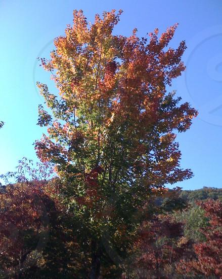 W NC Fall photo
