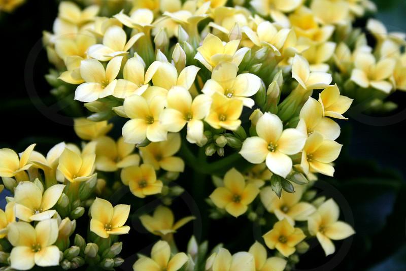 yellow and white flowers photo