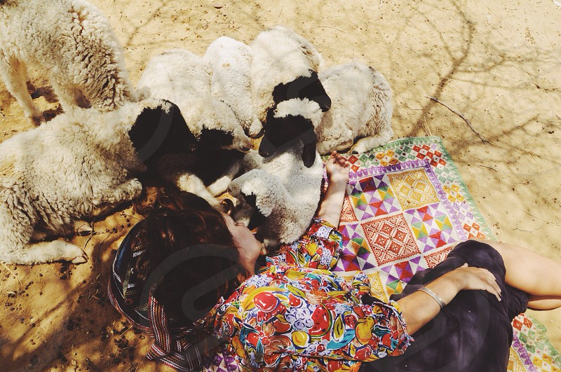 Sheep cuddles in the Great Indian Desert. Rajasthan. photo