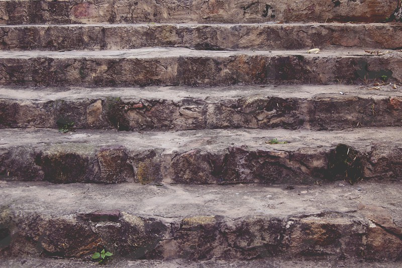 stairs plant stone photo