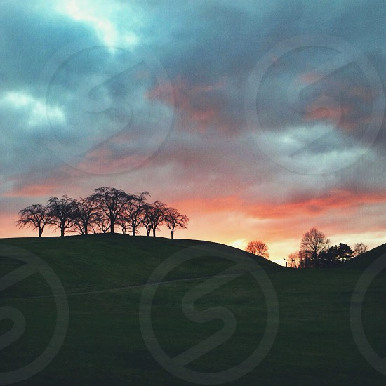 trees on rolling hill at sunset pink sky photo