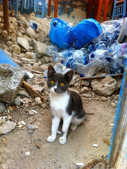 A cat living in a rubbish yard. photo