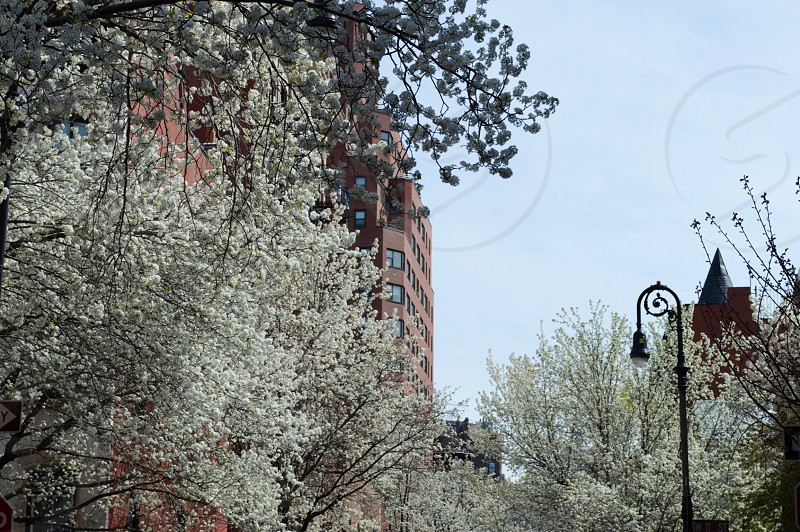 West Village New York Spring photo