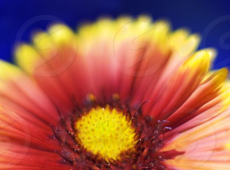 Macro color photo