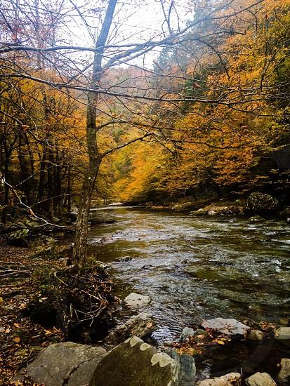 Stream of Smokey mountains  photo