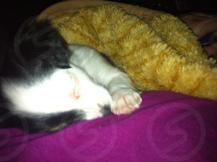 Sleeping puppy  photo
