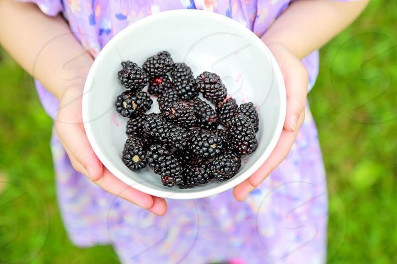 Young Girl holding Bowl of Blackberries blackberries bowl child hold holding picking blackberry pick purple fruit organic fresh local allotment produce home grown girl 6 7 8 9 health healthy diet photo