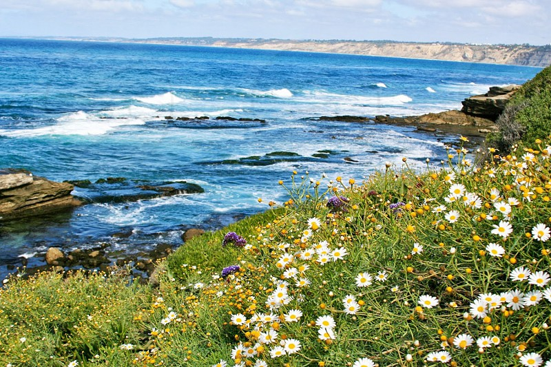 Flowers overlooking the ocean in San Diego CA photo