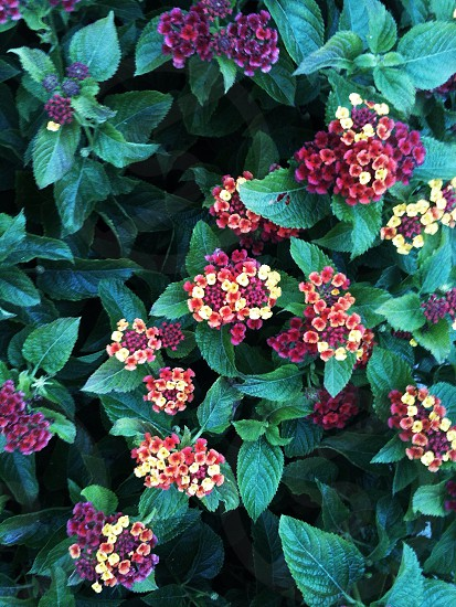 red and yellow flowers and green leaves photo