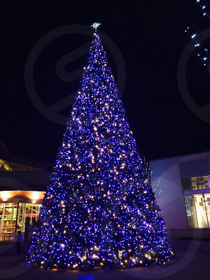 Huge Christmas tree  photo