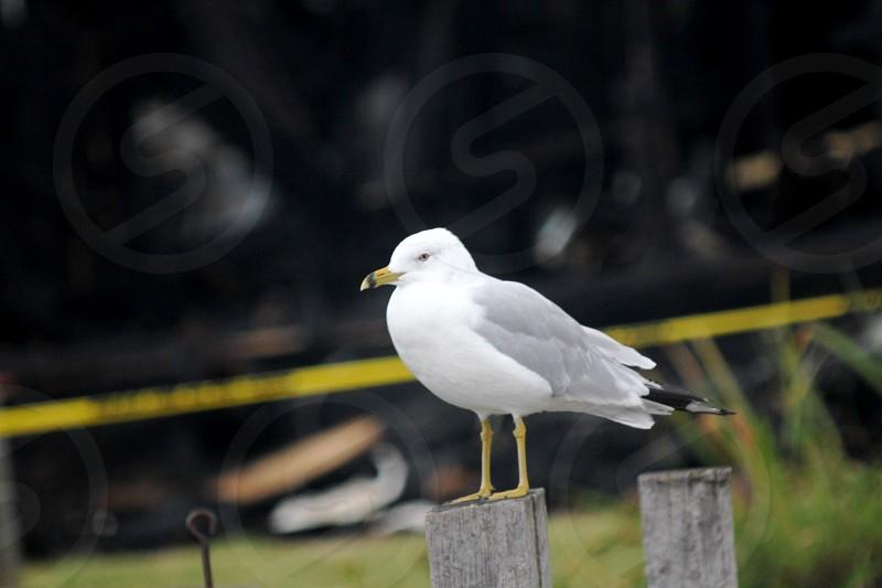 white-and-gray bird photo